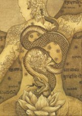 Etching, 'Kundalini Rising' - Snake writhes down man's bare back, ending in a lotus flower.