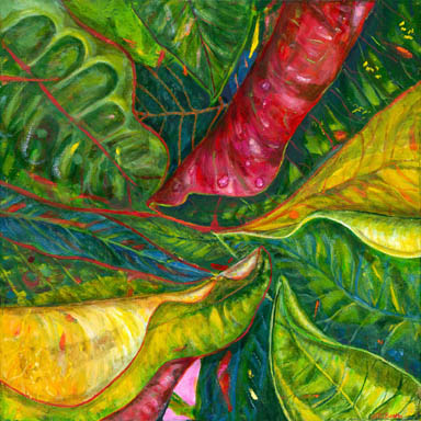 Red, green and golden colours of croton leaves