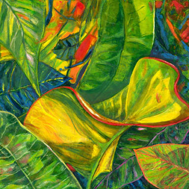 Curved yellow leaf of croton bush grows with other coloured leaves
