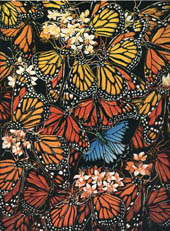 'Congregating' - red and orange butterflies with one blue flutter about in this lino print