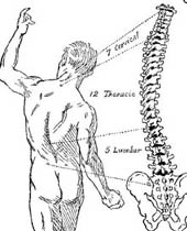 Back of twisted male naked figure with detailed spine on right