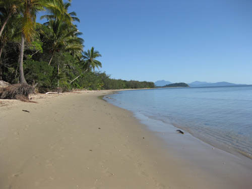 Coconut trees at end of Four Mile Beach, Port Douglas, North Queensland