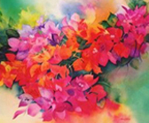 Gail Shaw - watercolour 'Bougainvillea'