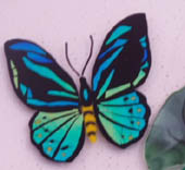 birdwing butterfly -  blues, greens, yellow and black