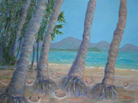 Coconut trees on Four Mile Beach sway their skirts in the breeze as their