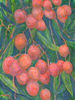 The delicious tasting and fragrantly perfumed lychees have a very short season in October and November.