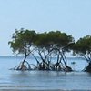 line of dark green mangroves on small sand spit