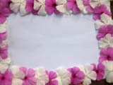alternating pink and white vinca flowers border a sheet of white paper.