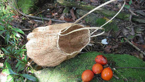 black palm basket and bright red rainforest seeds