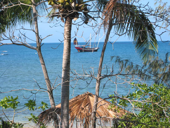 Chinese junk anchors at Low Isles - viewed through coconut palms on the island.