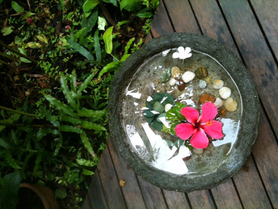 red hibiscus floats in shallow garden bowl