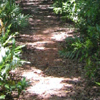 jungle path to the beach