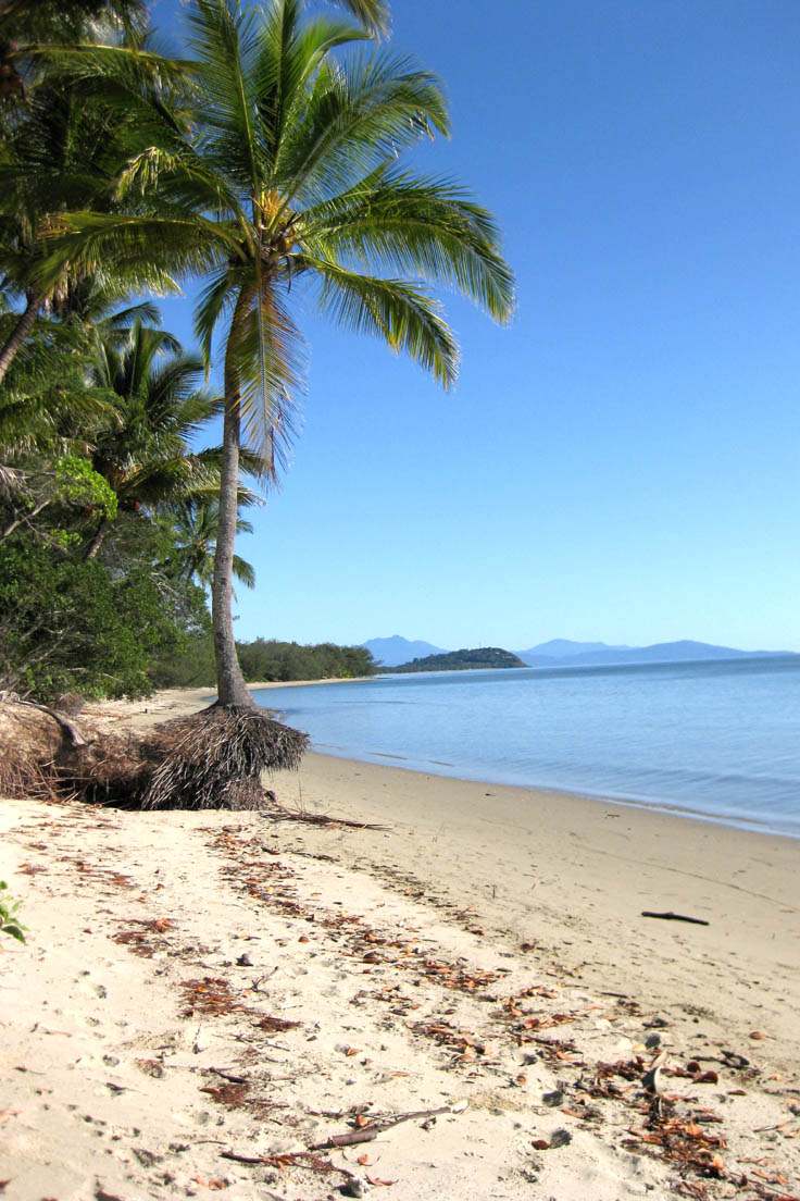 Looking north, Four Mile Beach Port Douglas, coconut palms overlooking beach and ocean