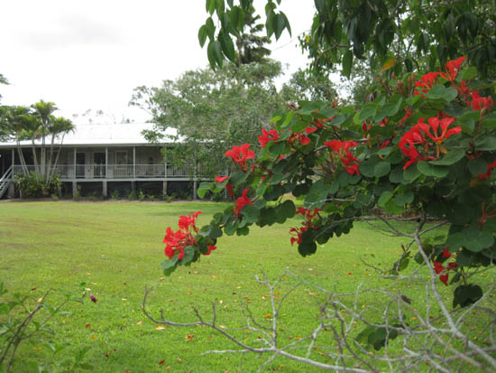 Brilliant red flowering tree frames the old Weatherby homestead.