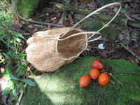 aboriginal woven basket and red foxtail palm seeds on ground near river.