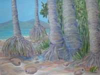 The exposed roots of coconut trees on Four Mile Beach look like grass skirts and it is easy to imagine the fallen nuts dancing to the same tune as their parents.