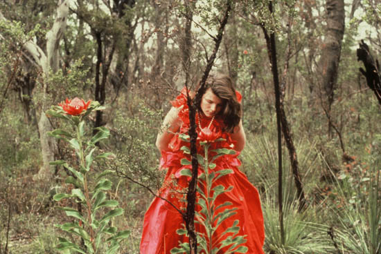 Girl in flame red dress examines waratah flowers in the bush