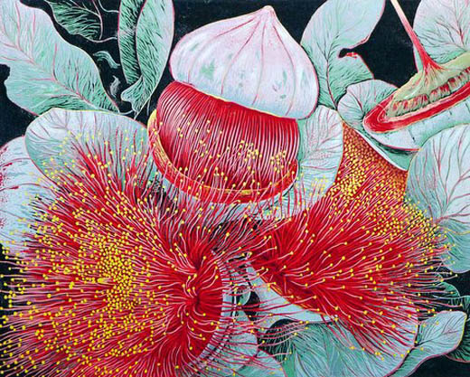 Lino print of Red Flowering Gum by Anna Curtis