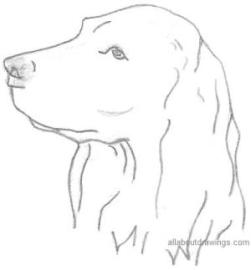 Kerry Godsall - line pencil drawing of a dog's head